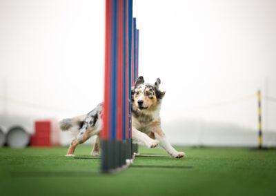 centro-cinofilo-felicia-addestramento-cani-bologna-slide-home-3