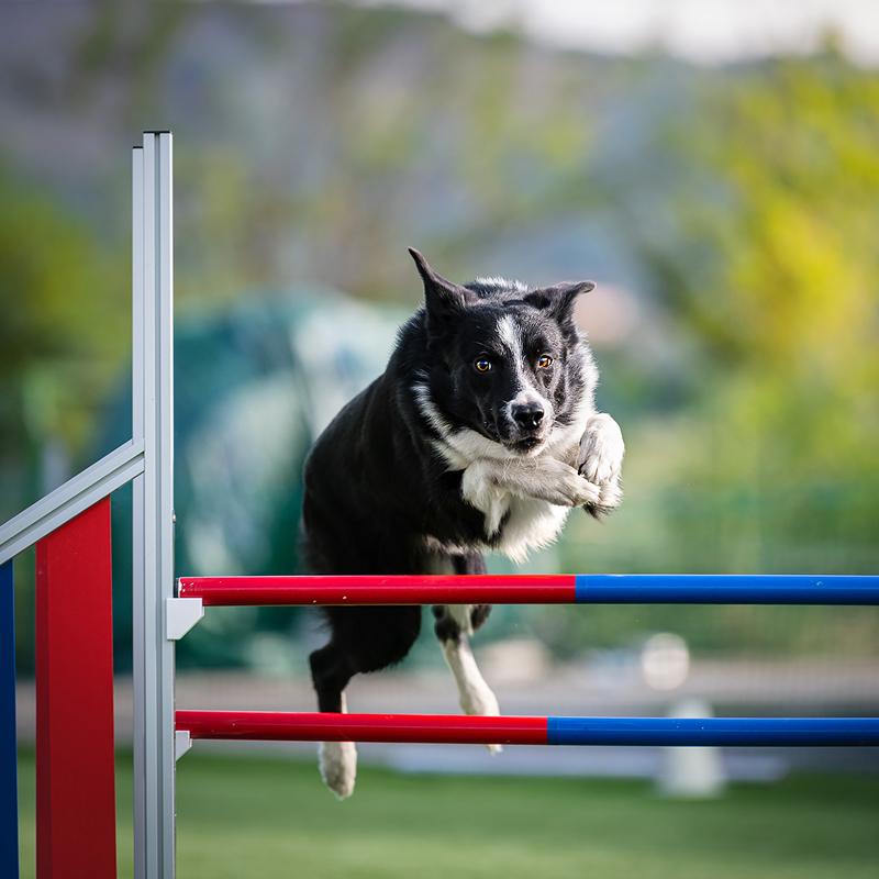 centro-cinofilo-felicia-addestramento-cani-bologna-attivita-agility-dog