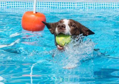 centro-cinofilo-felicia-addestramento-cani-bologna-attivita-sportive-gallery-swim-dog-sports-1