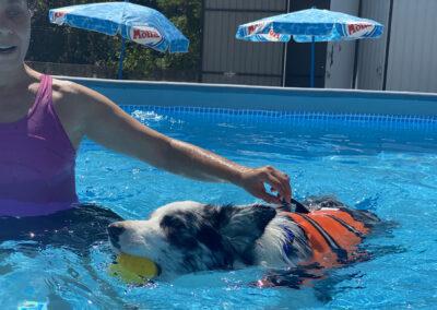 centro-cinofilo-felicia-addestramento-cani-bologna-attivita-sportive-gallery-swim-dog-sports-2