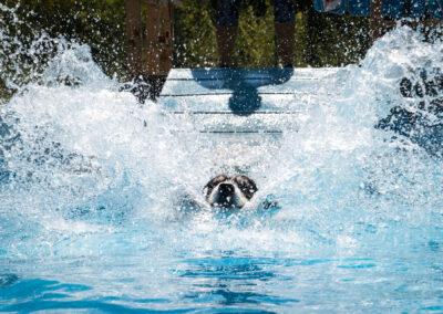 centro-cinofilo-felicia-addestramento-cani-bologna-attivita-sportive-gallery-swim-dog-sports-3