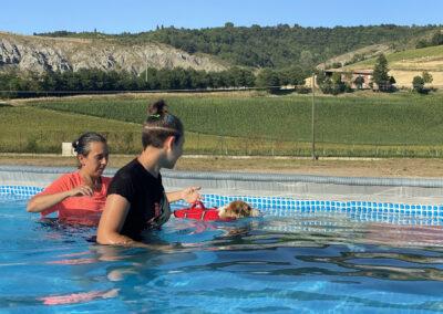 centro-cinofilo-felicia-addestramento-cani-bologna-attivita-sportive-gallery-swim-dog-sports-5