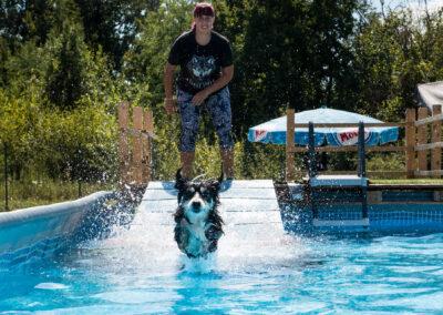 centro-cinofilo-felicia-addestramento-cani-bologna-attivita-sportive-gallery-swim-dog-sports-6