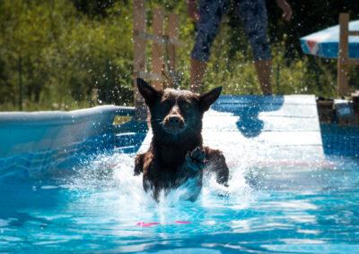 centro-cinofilo-felicia-addestramento-cani-bologna-attivita-sportive-gallery-swim-dog-sports-7