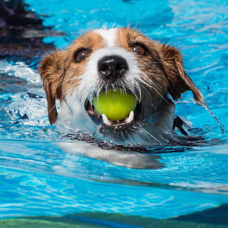 Centro Cinofilo Felicia - Addestramento Cani Bologna - Swim Dog Sport