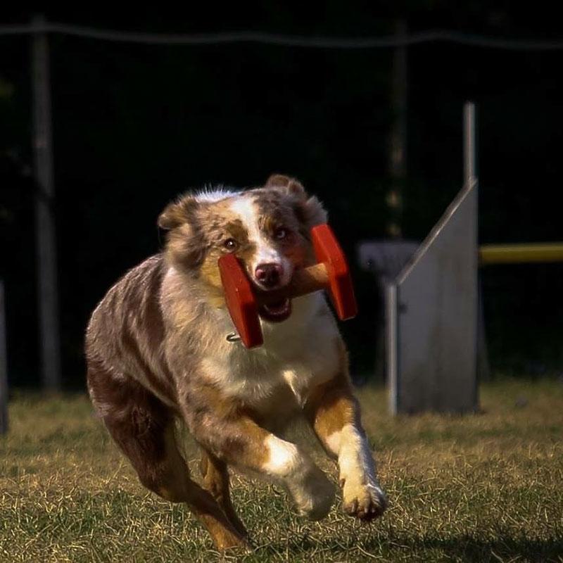 centro-cinofilo-felicia-addestramento-cani-bologna-attivita-obedience