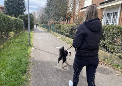 centro-cinofilo-felicia-addestramento-cani-bologna-attivita-sportive-gallery-mantrailing