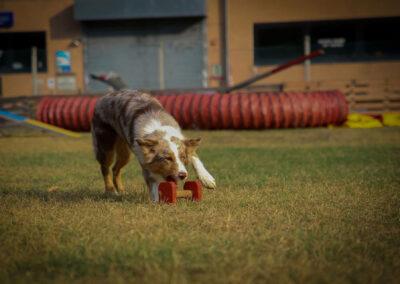 centro-cinofilo-felicia-addestramento-cani-bologna-attivita-sportive-gallery-obedience-1