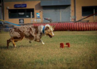 centro-cinofilo-felicia-addestramento-cani-bologna-attivita-sportive-gallery-obedience-2