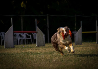centro-cinofilo-felicia-addestramento-cani-bologna-attivita-sportive-gallery-obedience
