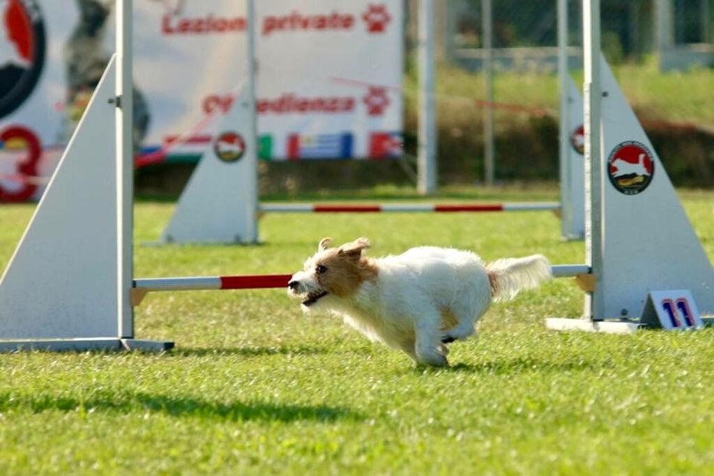 centro-cinofilo-felicia-addestramento-cani-bologna-storie-michela-e-rucola-1