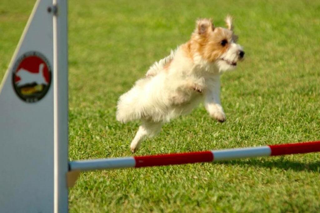 centro-cinofilo-felicia-addestramento-cani-bologna-storie-michela-e-rucola-2